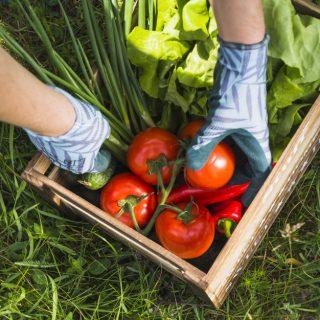 Peluang Bisnis Pertanian