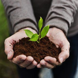 Ide Bisnis Pertanian