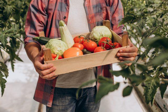 Keuntungan Bisnis Sayuran